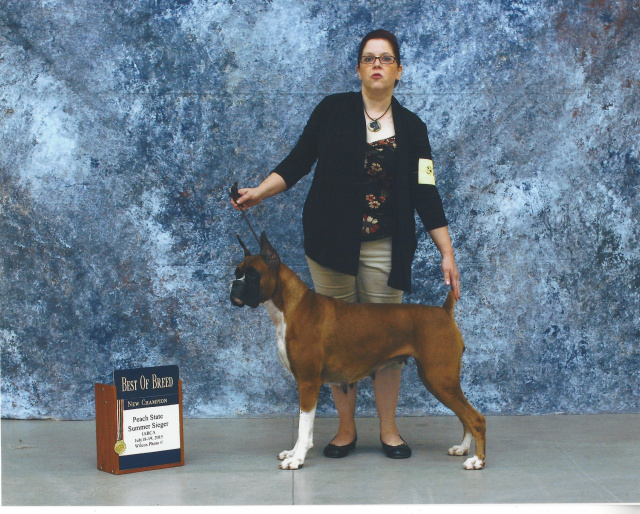 ... quality boxers, tight to the breed standard so both the United States and Europe can be proud of. All of our puppies come with a health guarantee.